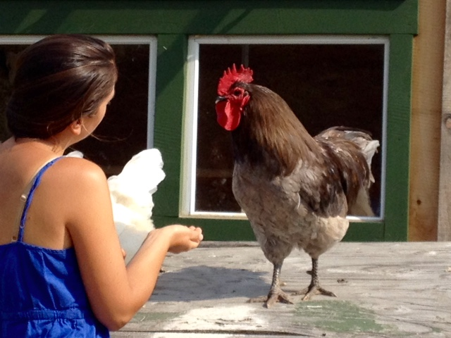 Jessie and her beautifully well-mannered Blue Orpington rooster, Gabby