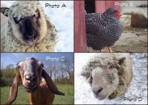 farmpostcards