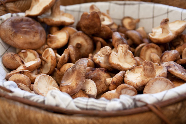 Cook along in September by using mushrooms and using #powerpantry to share posts on social media. You can also share recipe ideas, photographs and tips on Ravelry. Click for a link to the discussion board.