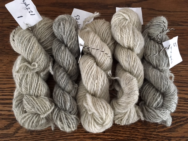The snow day was the perfect opportunity to ply all spindle-spun singles of Shetland. Look at the beautiful array of color from one fleece.